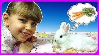 ТАЙНАЯ ЖИЗНЬ МОЕГО КРОЛИКА! Первые дни Бусинки в доме! Что нужно знать перед покупкой кролика?