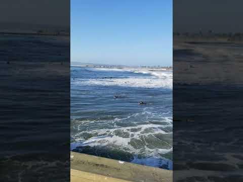 Surfers in the Pacific Ocean San Diego Ocean Beach City beach