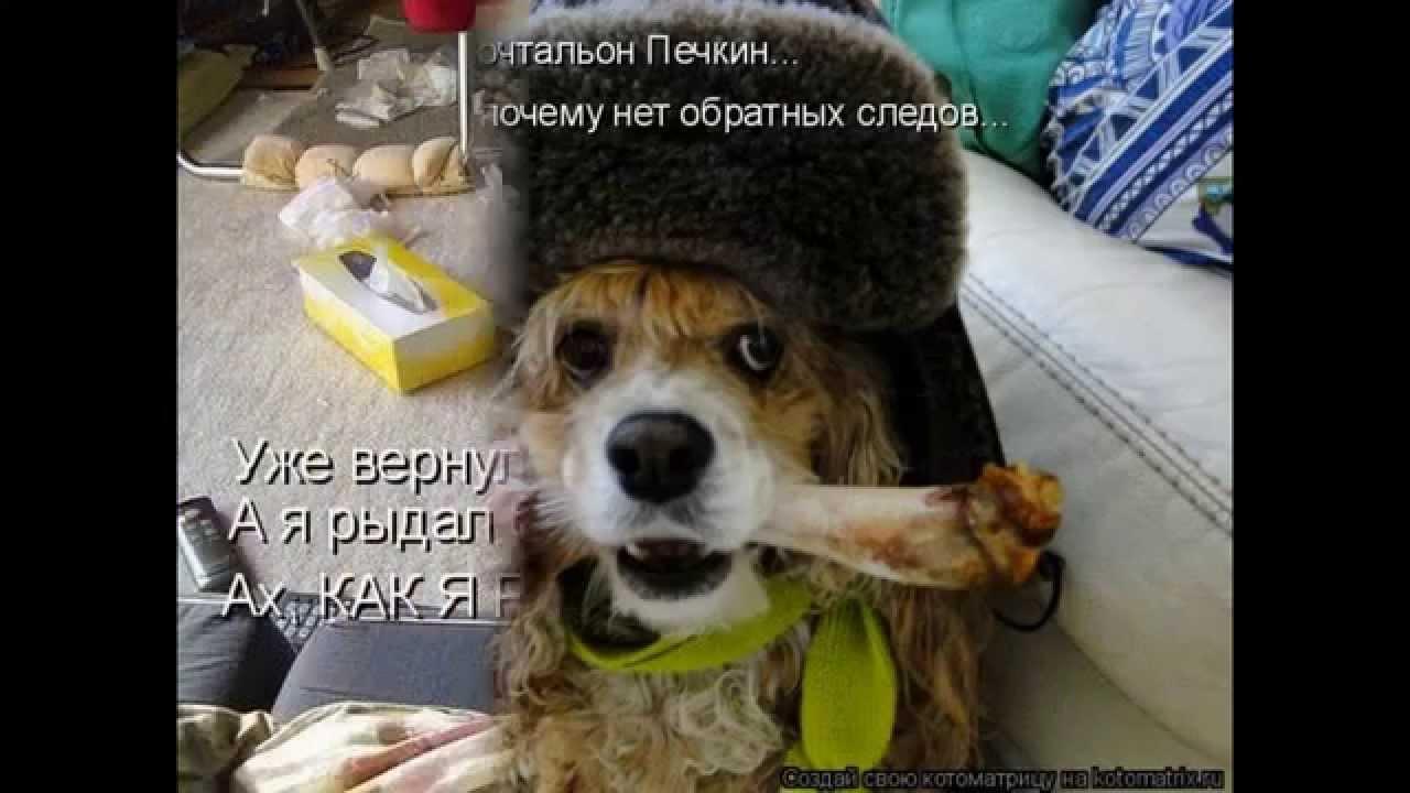 Смешные картинки с надписями ! - YouTube