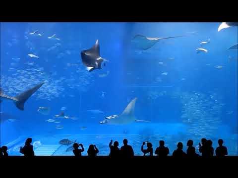 10 Hours Of Okinawa Churaumi Aquarium