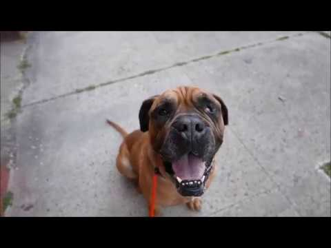 Bugsy 26066 | Wrinkly, Wiggly & Wonderful NYCACC