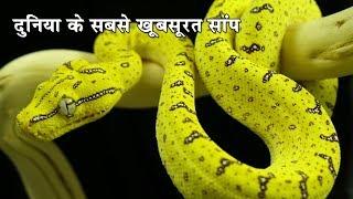 दुनिया के सबसे खूबसूरत सांप| 5 gorgeous snake species from around the world|Most Beautiful snake