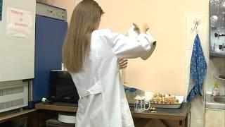 Ярославская студенка выяснила, что чай вреден для организма человека
