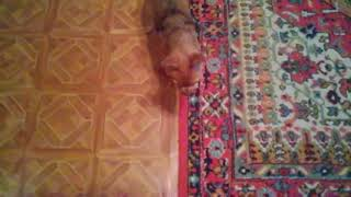 Бешеная  и нормальная собака