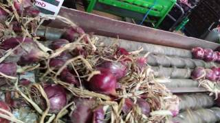 Onion topper in action