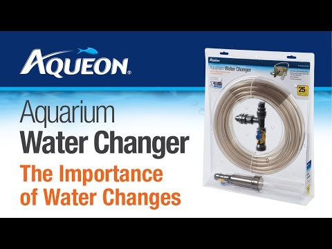 Aqueon | The Importance Of Aquarium Water Changes For Success