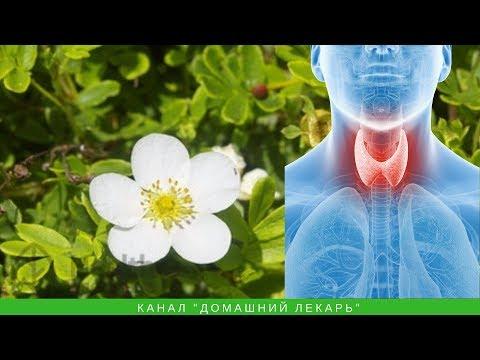 Орех, пустырник и лапчатка для щитовидной железы - Домашний лекарь - выпуск №238