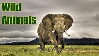 Музыка слушать бесплатно / Wild Animals
