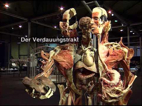 Körperwelten von Prof. Gunther von Hagens