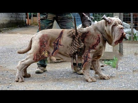 Die AUßERGEWÖHNLICHSTEN Hunderassen der Welt