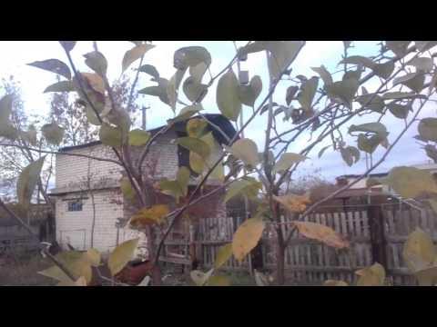 Дача 4 сотки будущий сад часть 4 Самарская область - город Сызрань