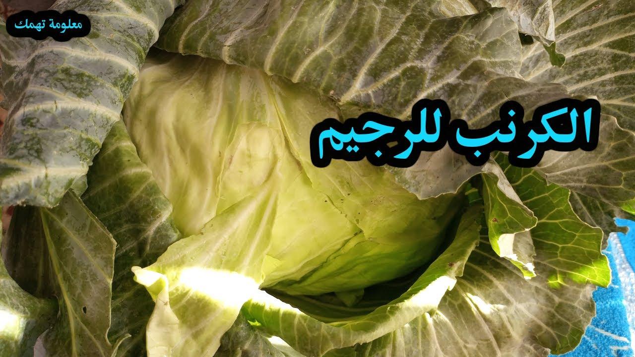 الكرنب فوائد صحية للجسم والرجيم الكرنب فوائد رائعة !!!
