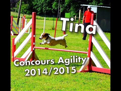Tina (Jack Russel Terrier) Concours Agility 2014/2015