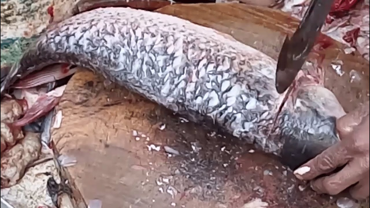 Big fish cutting videos cutting fresh rohu for fish for Pictures of big fish