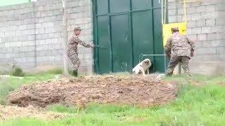 Куда девают бродячих животных в Шымкенте