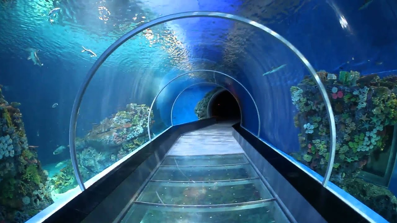 Tunnel with fish. Fun for kids to look at. National