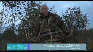 Охота на лося на вабу видео