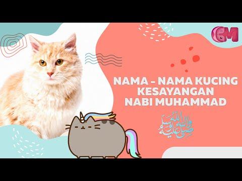 Nama Nama Kucing Yang Bagus Perempuan Betina Cantik Lucu Imut Terbaru Huruf Depan I Youtube