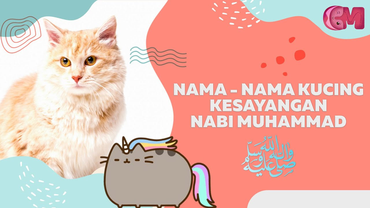 Daftar Nama Nama Kucing Islami Kucing Kesayangan Nabi Muhammad Ï·º Youtube