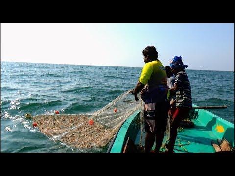 PRAWN CATCHING AT SEA
