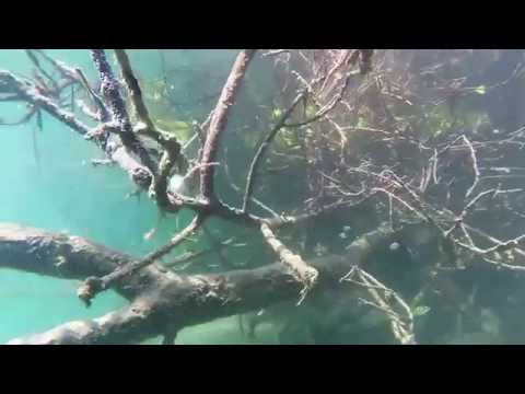 A day on the water - Fort Pierce inlet and ocean - snorkling inlet