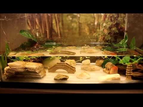 How to Setup a Fire Belly Newt Tank (Simple Method)