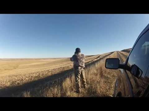 In Pursuit Of Monster Mule Deer On The Blackfeet Indian Res 2014