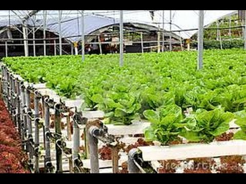 how to grow tomato, &, vegetable, farming