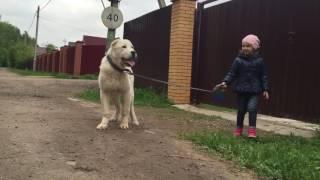 Продается щенок(кобель) возраст 7 месяцев- слушает и выполняет команды даже ребенка))