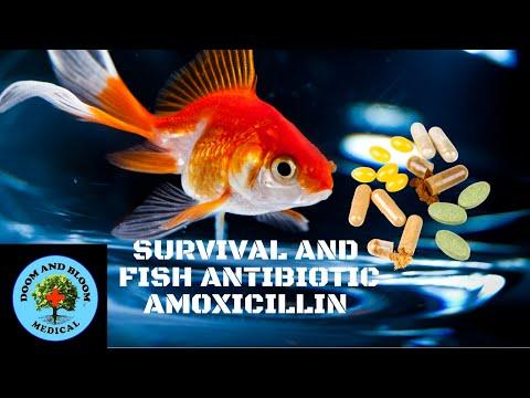 Survival And Fish Antibiotics Series: Amoxicillin