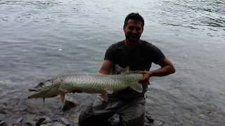 Musky on the fly