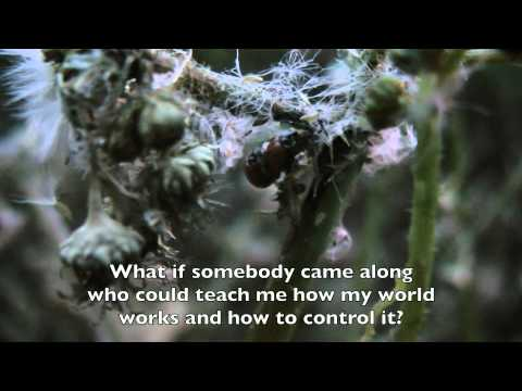 Illusions By Richard Bach Book Trailer