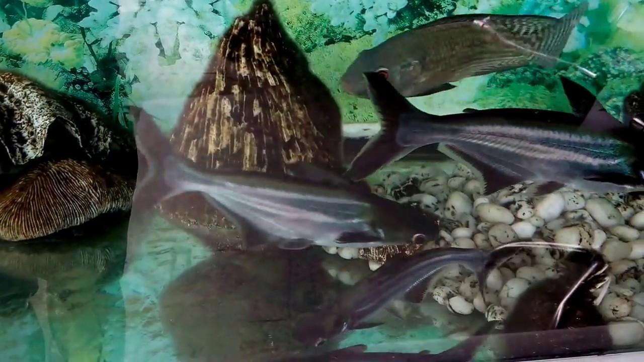 8800 Koleksi Gambar Ikan Hiu Hias Gratis