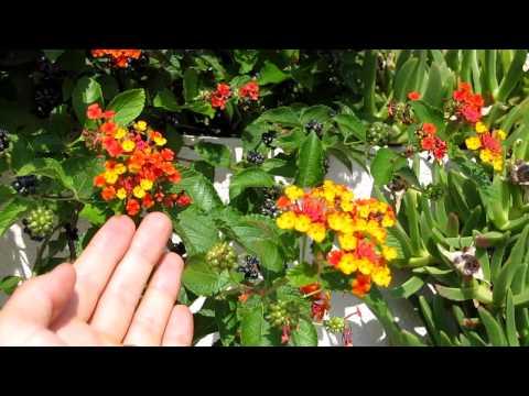 Tiny Croatian Hummingbird