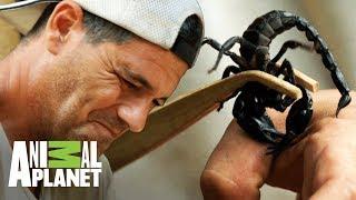 Frank deja que un escorpion lo pique Wild Frank En busca del dragon Animal Planet