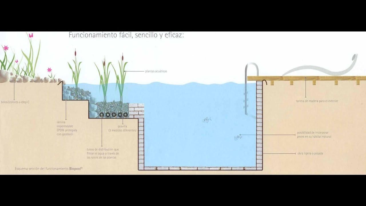Como construir una piscina natural paso a paso youtube for Como hacer una piscina natural