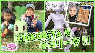 【Pokémon GO in NL】CHIKORITA !! MEWTWO AND MELTAN in POKÉMON GO! チコリータ!ミュウツー! メルタン!【オランダでポケモンGO】