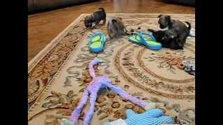 Hannah's Kids have Casual Playtime with Mom thumbnail