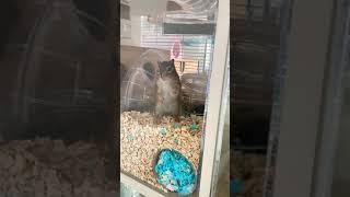 이곳은 람주의 침실입니다. 다람쥐