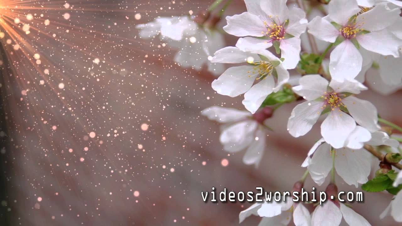 spring and easter flowers worship motion background