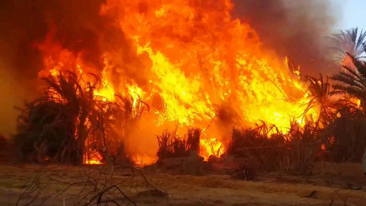 حريق قرية الراشدة فى الداخلة الوادى الجديد يلتهم ما يقرب من 40 فدان أشجار نخيل وفاكهة