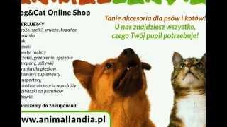 Kagańce dla psów, smycze dla psów, legowiska dla kotów, zabawki dla zwierząt- ANIMALLANDIA