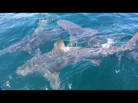Shark Fishing Fun off the East Coast of Florida