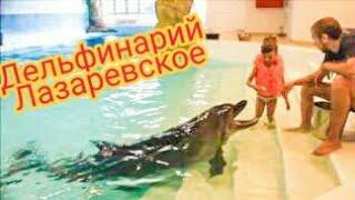 Плаваю с ДЕЛЬФИНЧИКАМИ в дельфинарии в Лазаревском (Сочи)! ВЛОГ! Видео для детей! Dolphinarium(Всем огромный привет! Меня зовут СофиКошка, мне 6 лет и я девочка видеоблогер. Летом я посетила классный..., 2015-12-23T19:20:38.000Z)
