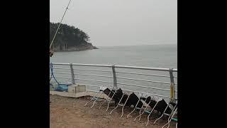 만리포글램핑  원투낚시  ~대물..토끼방똔님 히트히트~…