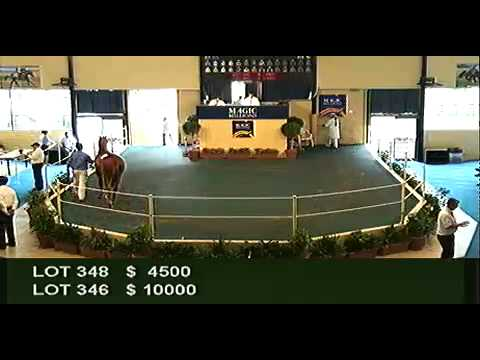2012 Adelaide Yearling Sales Session 2