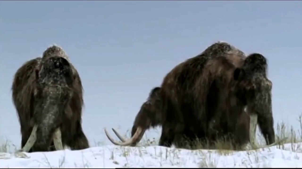 Beast 3d Wallpaper Walking With Beasts The Mammoth Journey Migration