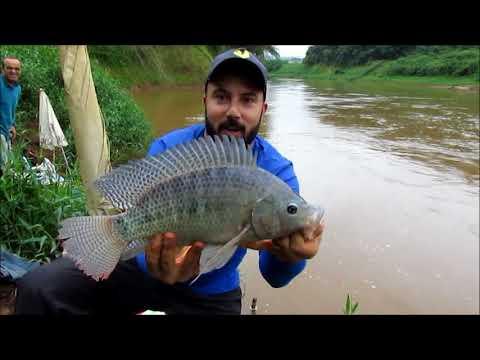 Muito peixe na nova ceva-Rio verde sul de Minas
