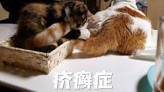 猫の疥癬症!!みかんが凄い事に!驚かないでください
