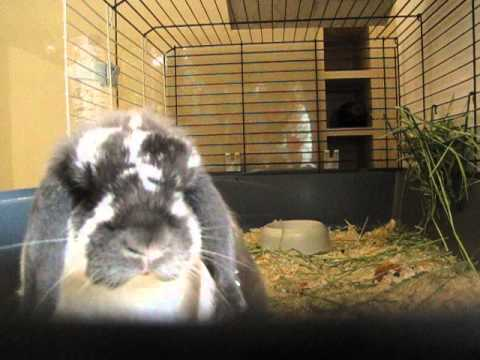 rabbit live webcam